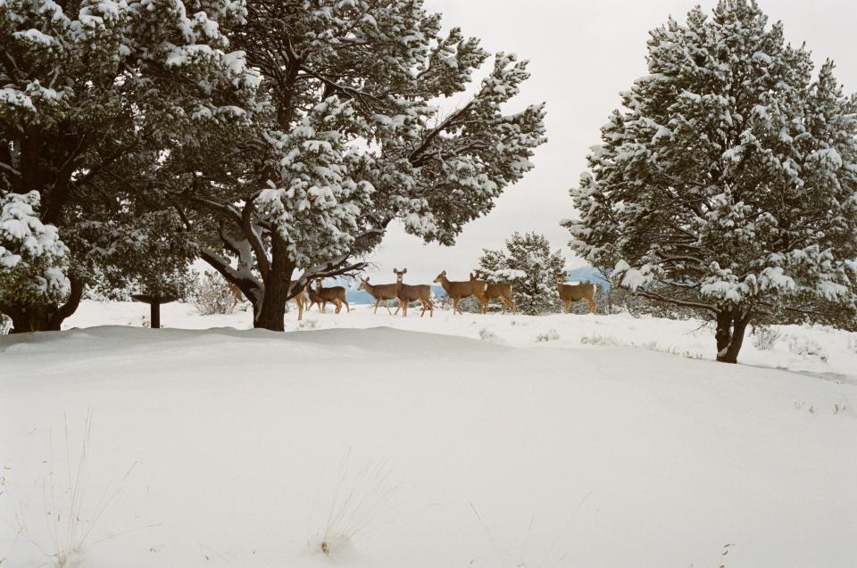 Virginia Deer Harvest Numbers Likely to Topple Last Year's