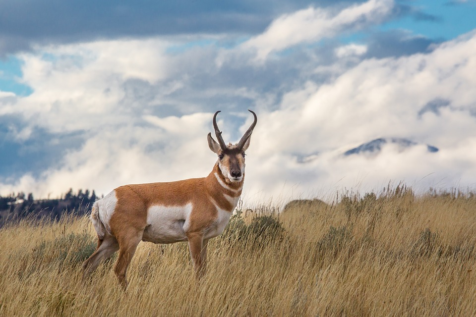Pair of Nebraska Men Fined for Killing 25 Antelopes