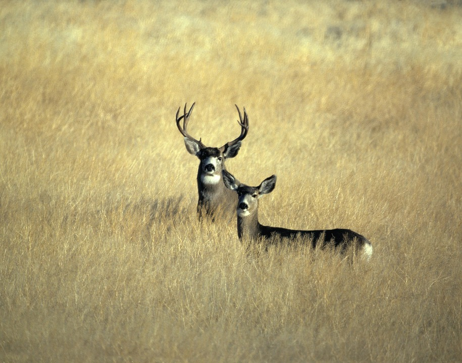 Hunting is Conservation – Here's 25 Reasons Why