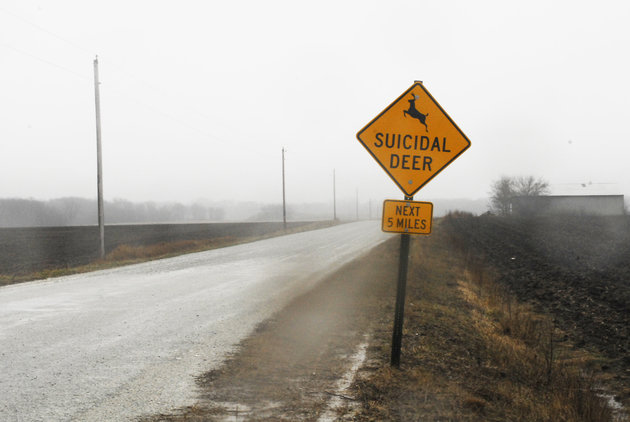 suicidal-deer-sign