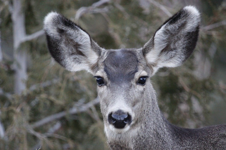 Connecticut Man Arrested for Trying to Prevent Deer Hunting
