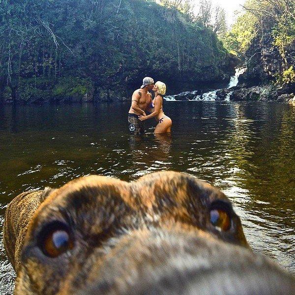 couple-kissing-in-lake-dog-watching