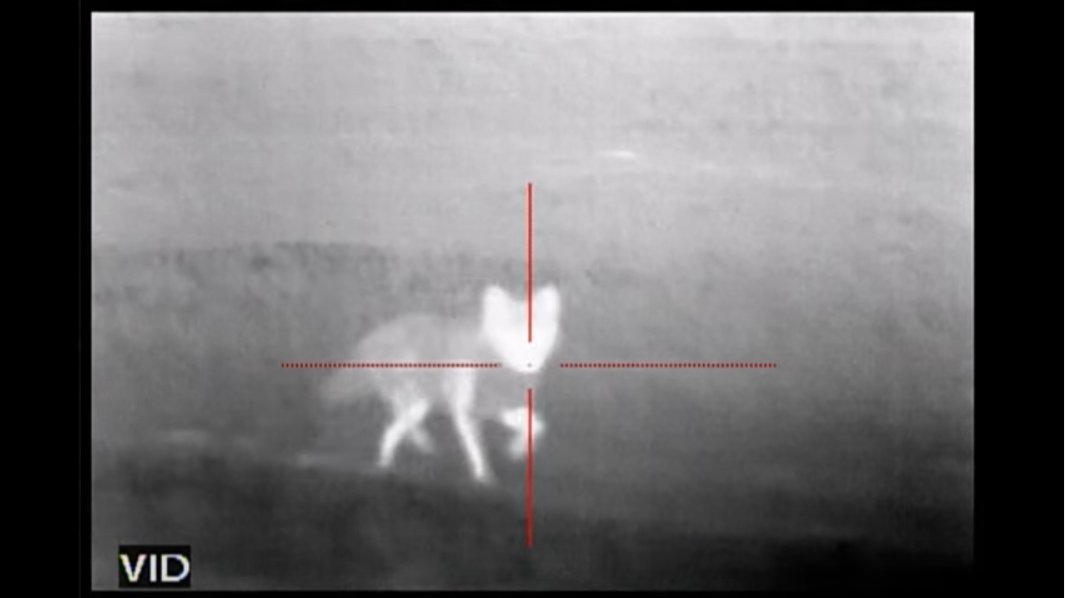 Minnesota Proposes Allowing to Night Vision to Hunt Coyotes