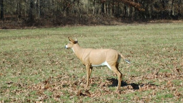 Ontario Couple Charged After Shooting Deer Decoy