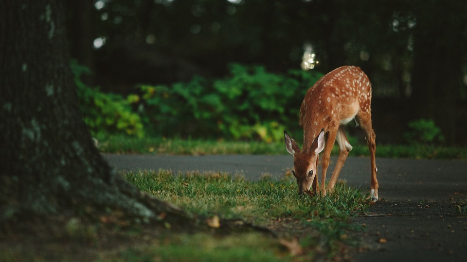 NY Town Creates Online Map for Residents to Report Deer Sightings