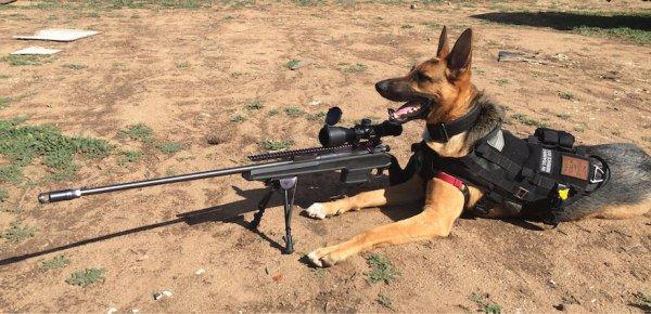 german-shepherd-with-rifle