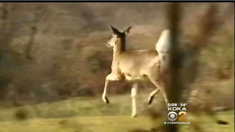 Pennsylvania Men Facing Charges in Alleged Deer Poaching Operation