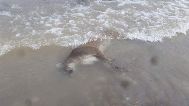 mountain-lion-found-washed-ashore-in-wyoming