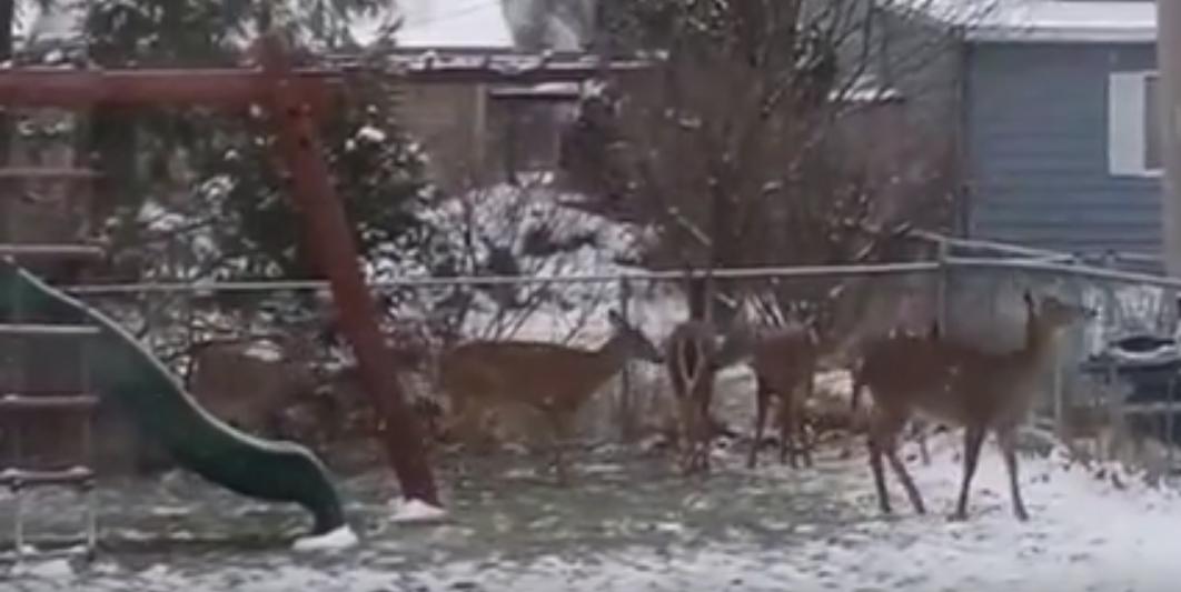 ohio-boy-finds-deer-in-back-yard