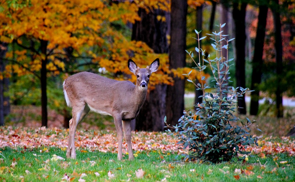 Deer Hunting Changes Proposed in New Brunswick