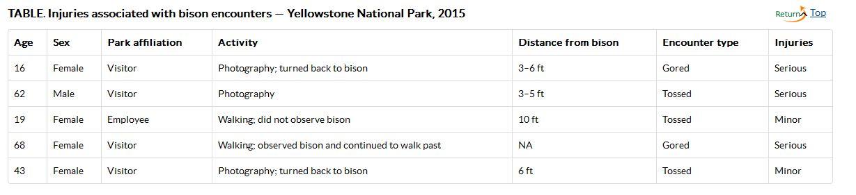 bison-attacks-yellowstone-park-2015