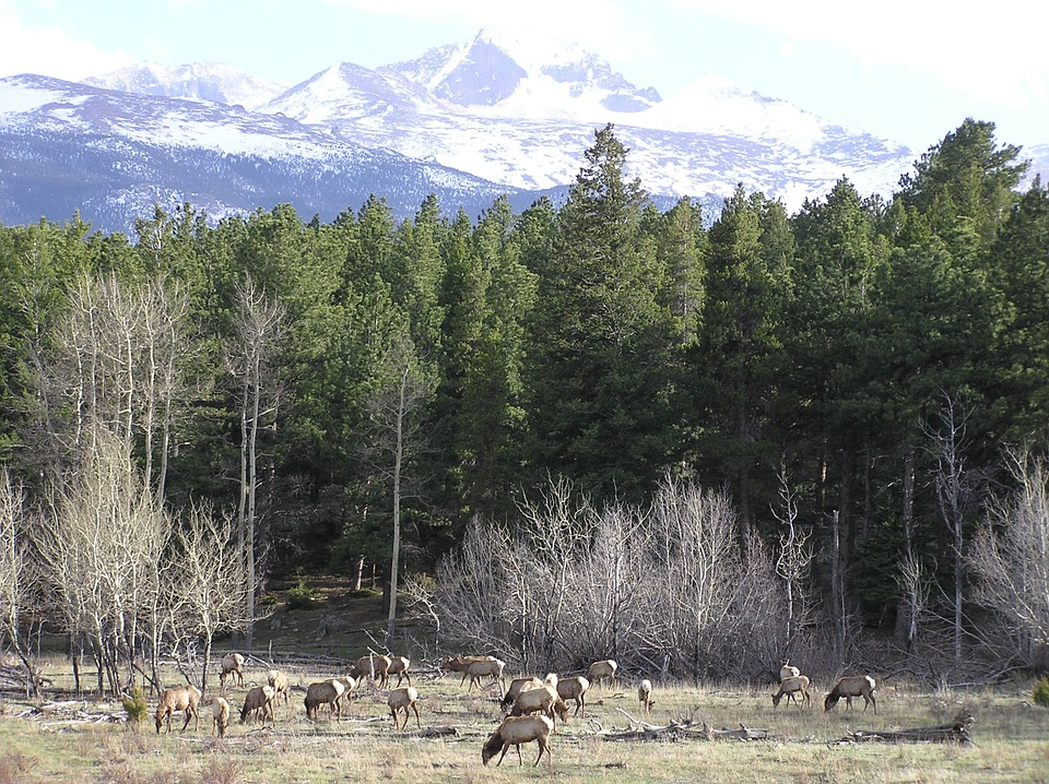 Montana Professor Receives Grant to Continue World's Longest Running Elk Study