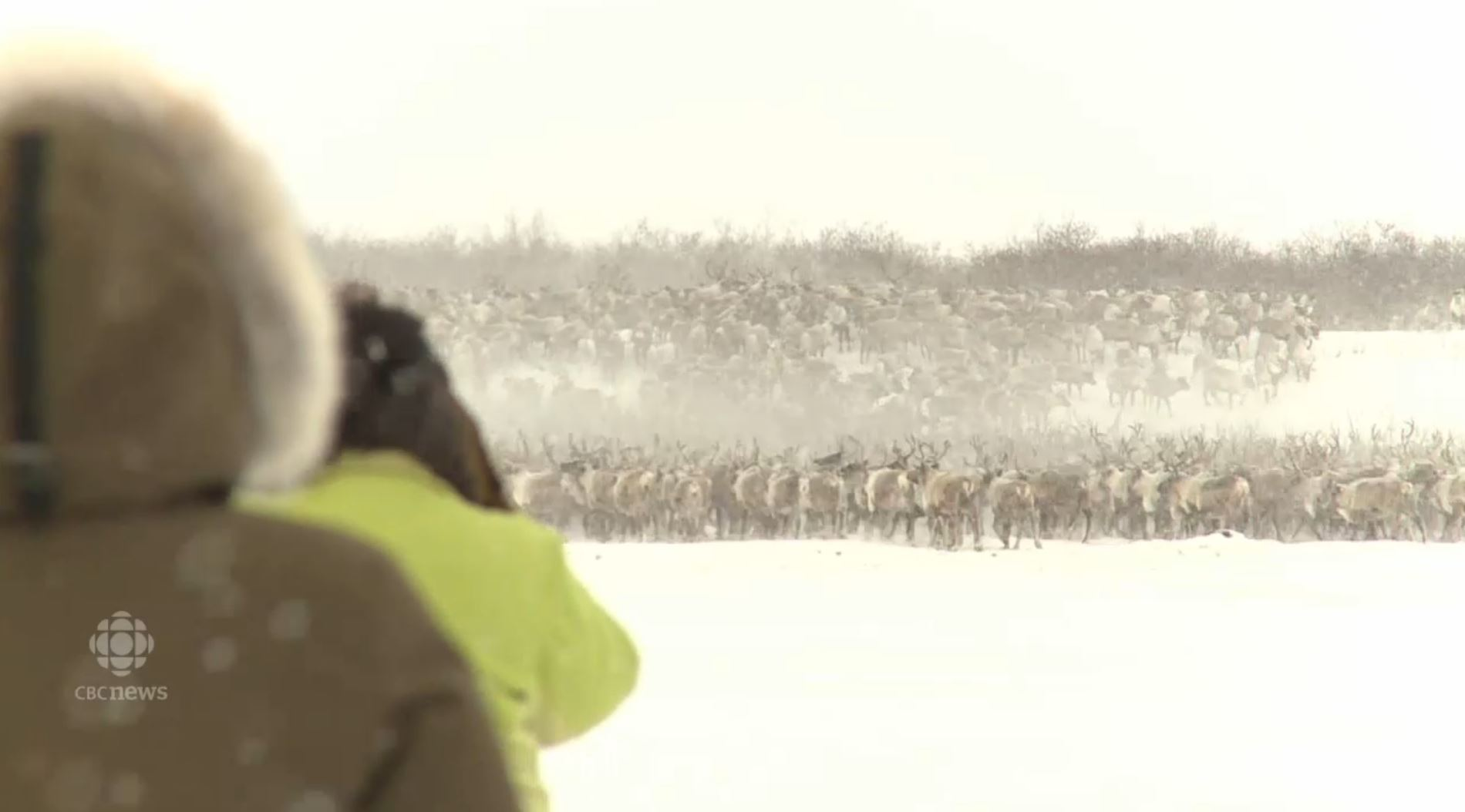 200 Spectators Take in 81st Annual Inuvik Reindeer Crossing
