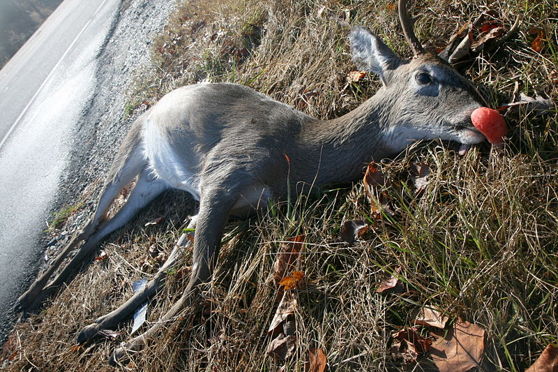 State Stops Picking Up Deer Carcasses on Local Roads