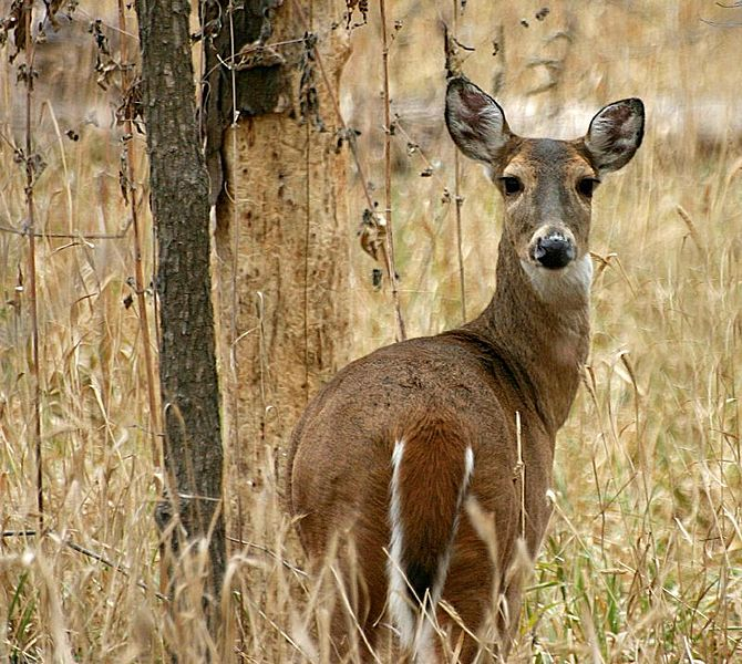 Alabama's Gun Deer Season Could Be Extended into February
