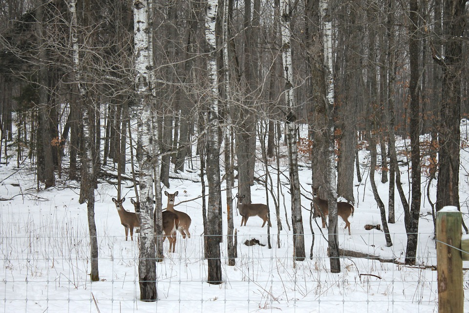 New York State Deer Harvests Decrease in 2015
