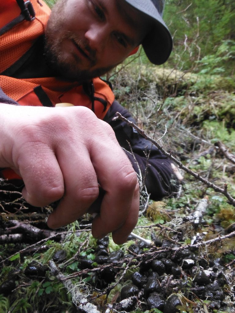 alaska-wildlife-biologist-examines-deer-droppings