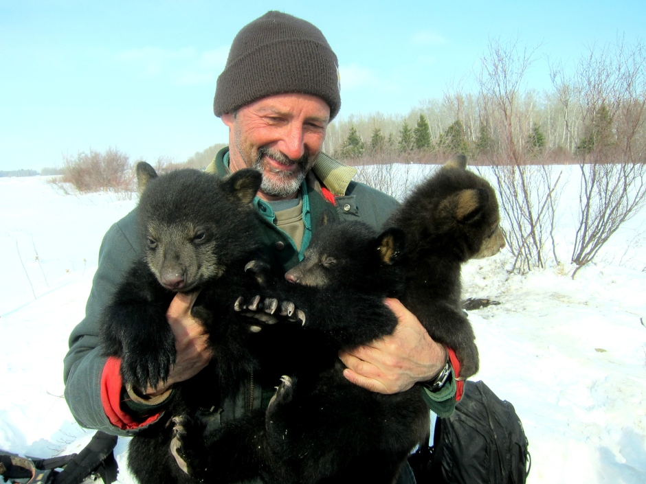 dave-garshelis-with-bear-cubs