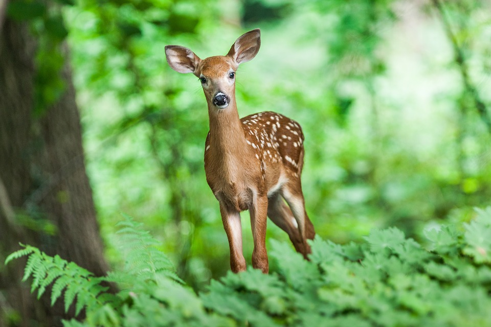 Ann Arbor's New City Budget Allocates $145K for Deer Management