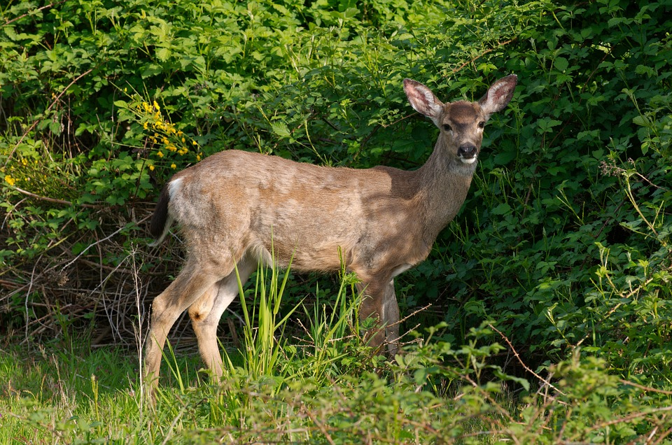 Missouri Increases CWD Sample Collection