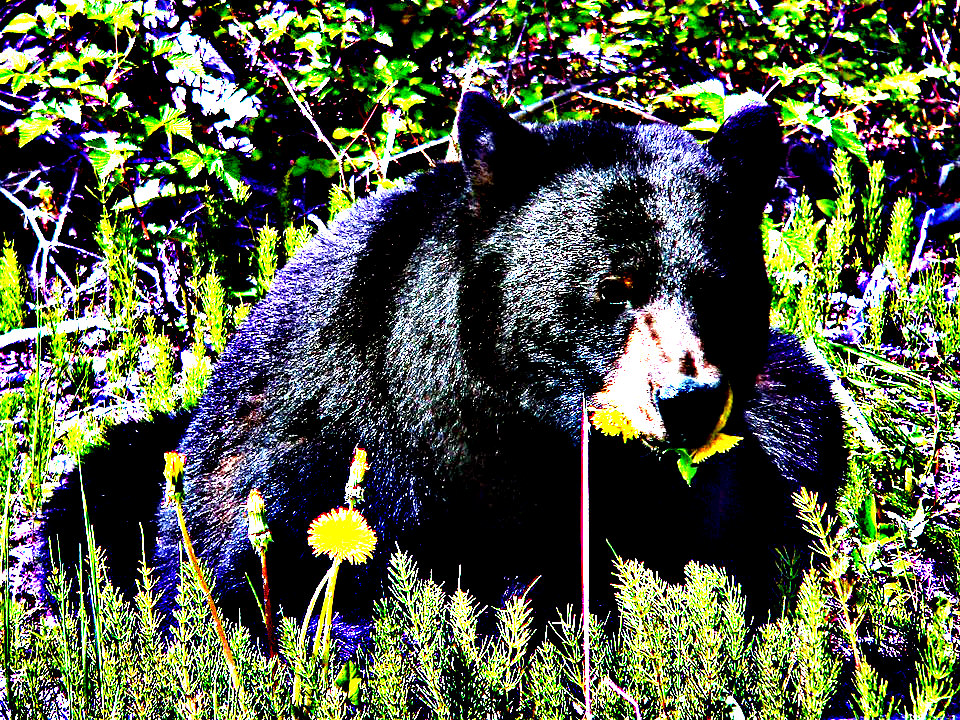 Florida Officials Recommend Fall Bear Hunt Amid Brutal Opposition