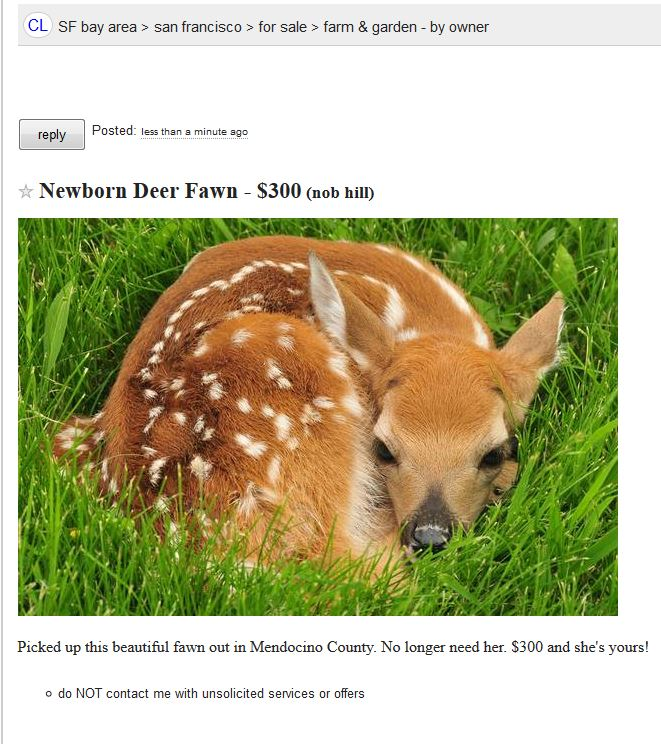 This Woman Caught a Baby Deer and Tried to Unload it on Craigslist