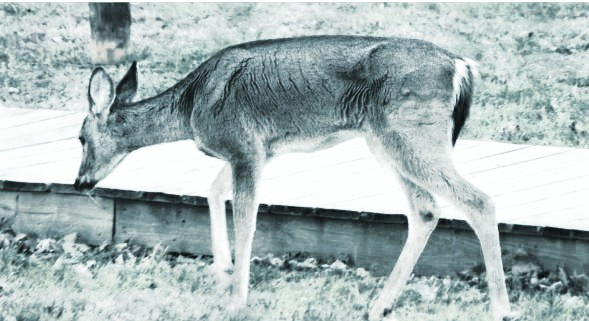 Arkansas Game and Fish Commission Passes New CWD Regs