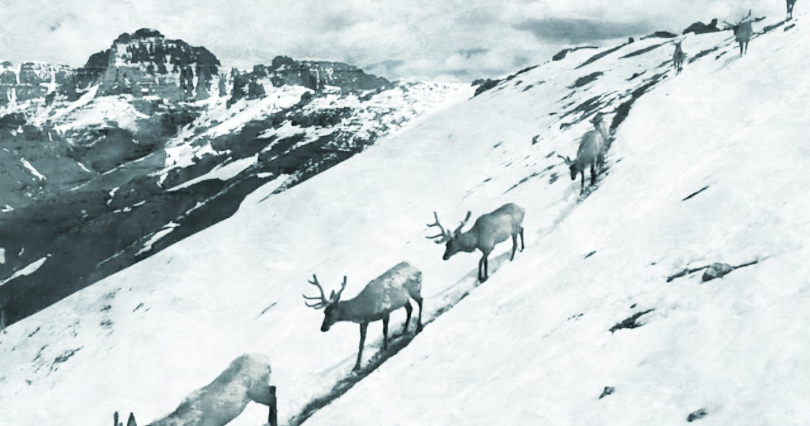 """Invisible Boundaries"" Elk Exhibit Opens in Wyoming"