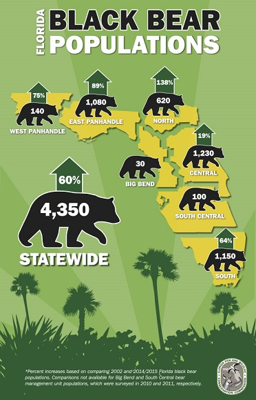 florida-black-bear-population-infographic