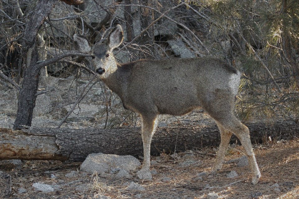 CWD Claims First Mulie in Star Valley