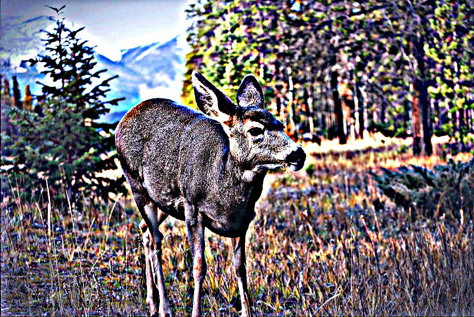 More Antlerless Whitetail Restrictions Proposed in Washington