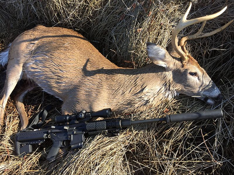 Louisiana Considers Ban on Out-of-State Deer Carcasses