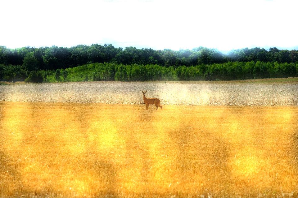 Michigan Landowners Can Now Get Funding for Deer Habitat