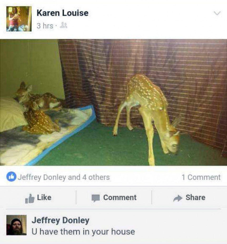 karen-hofstetter-facebook-post-depicting-fawns-roaming-in-her-home