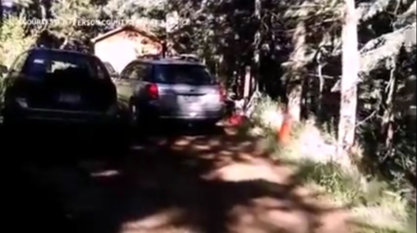 The Black Bear in Colorado Who Locked Itself Inside a Subaru