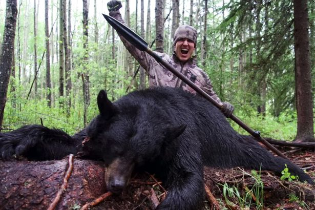 Alberta Government Investigating Black Bear Killed with Spear