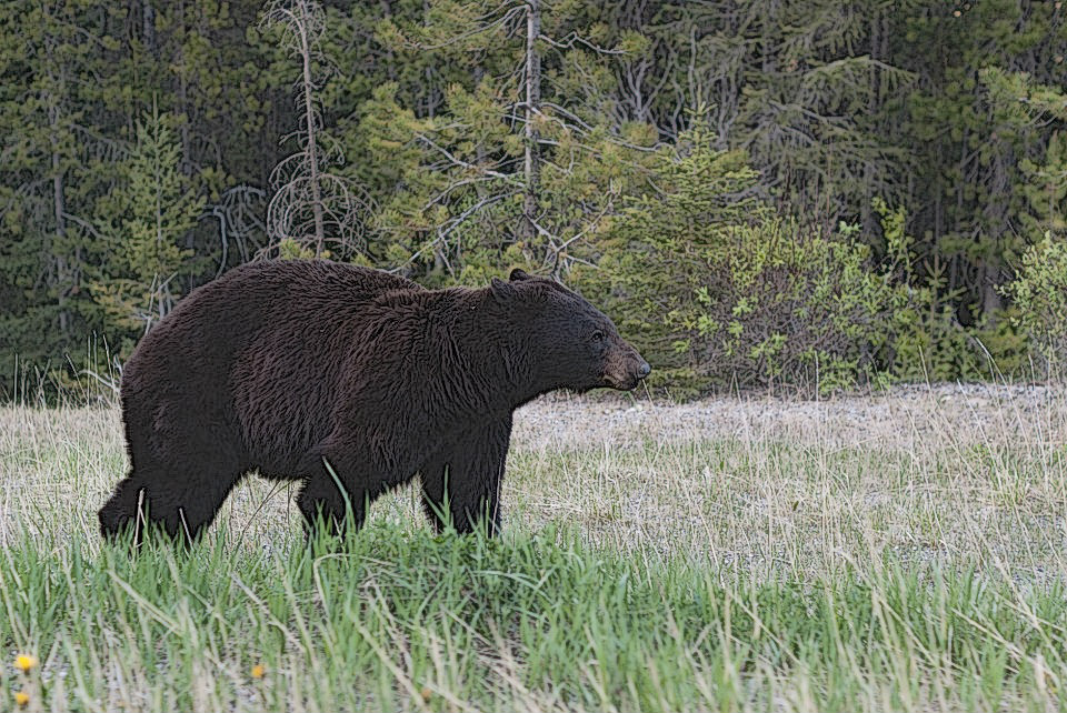 New Jersey Bear Hunt Shatters Record Harvest Numbers