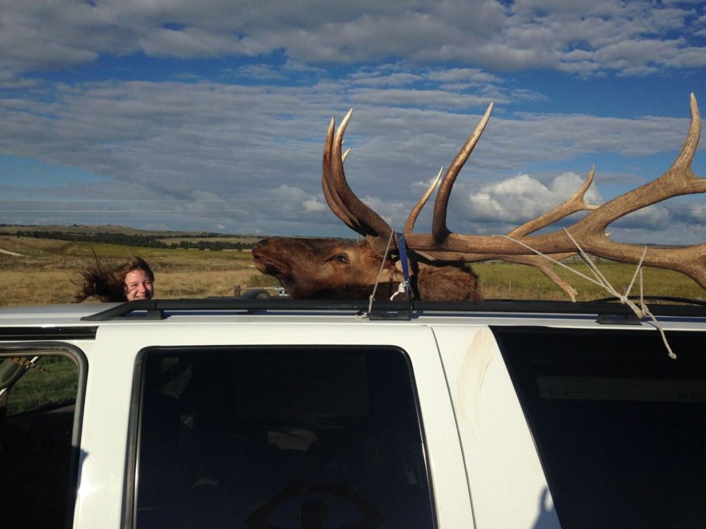 hannah-helmer-nebraska-state-record-bull-elk-in-vehicle