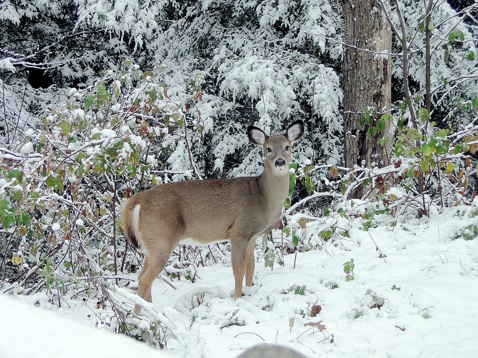 N.D. Wildlife Officials Concerned About Harsh Winter's Effects on Wildlife