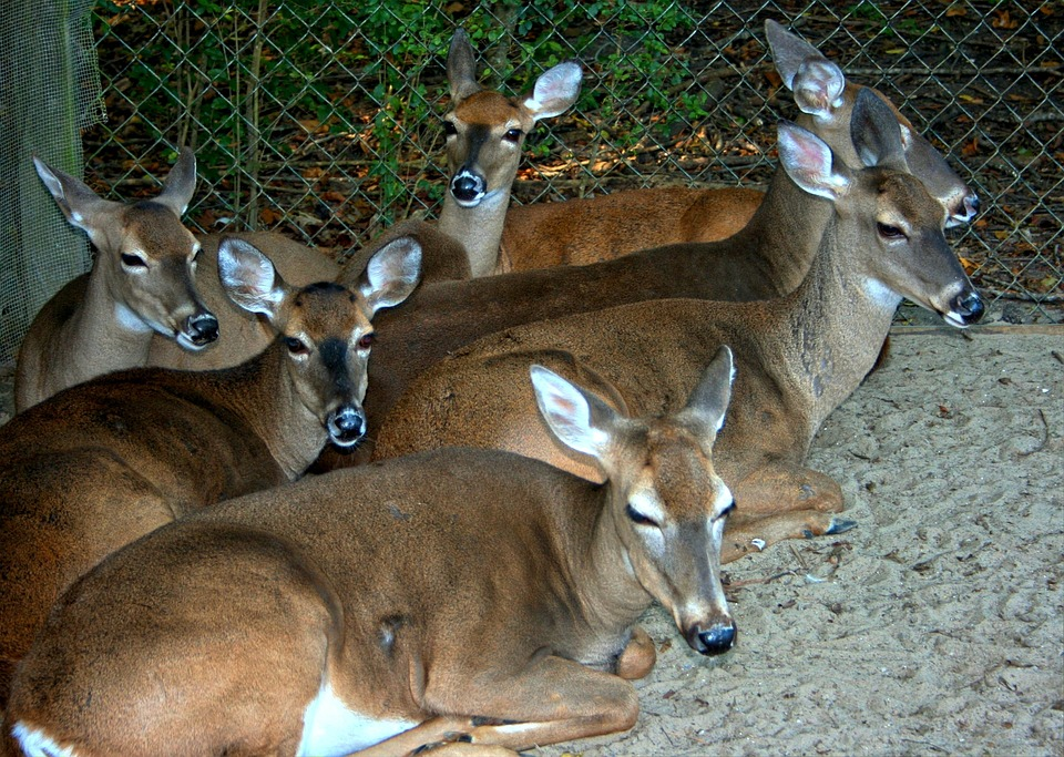 Pennsylvania Farms Quarantined After Chronic Wasting Confirmed