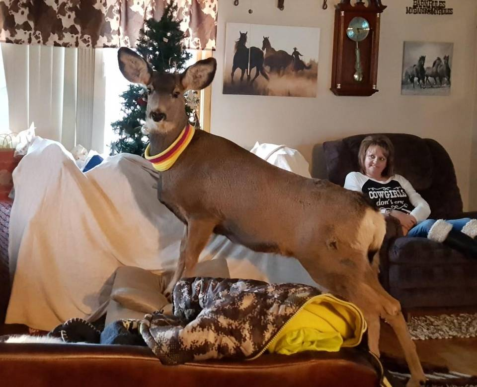 Mule Deer Kept as Pet Euthanized by Kansas Wildlife Officials