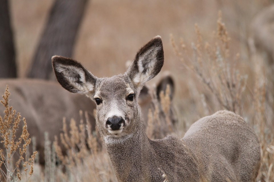 Two North Dakota Deer Test Positive for CWD