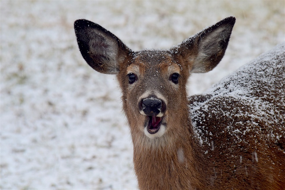Michigan DNR Stands by Hunting Despite Ann Arbor's Plan to Sterilize Deer