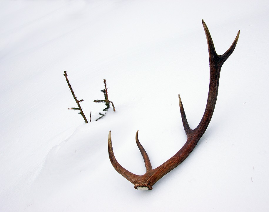 Utah Officials Close Shed Hunting in 11 Counties Due to Weather