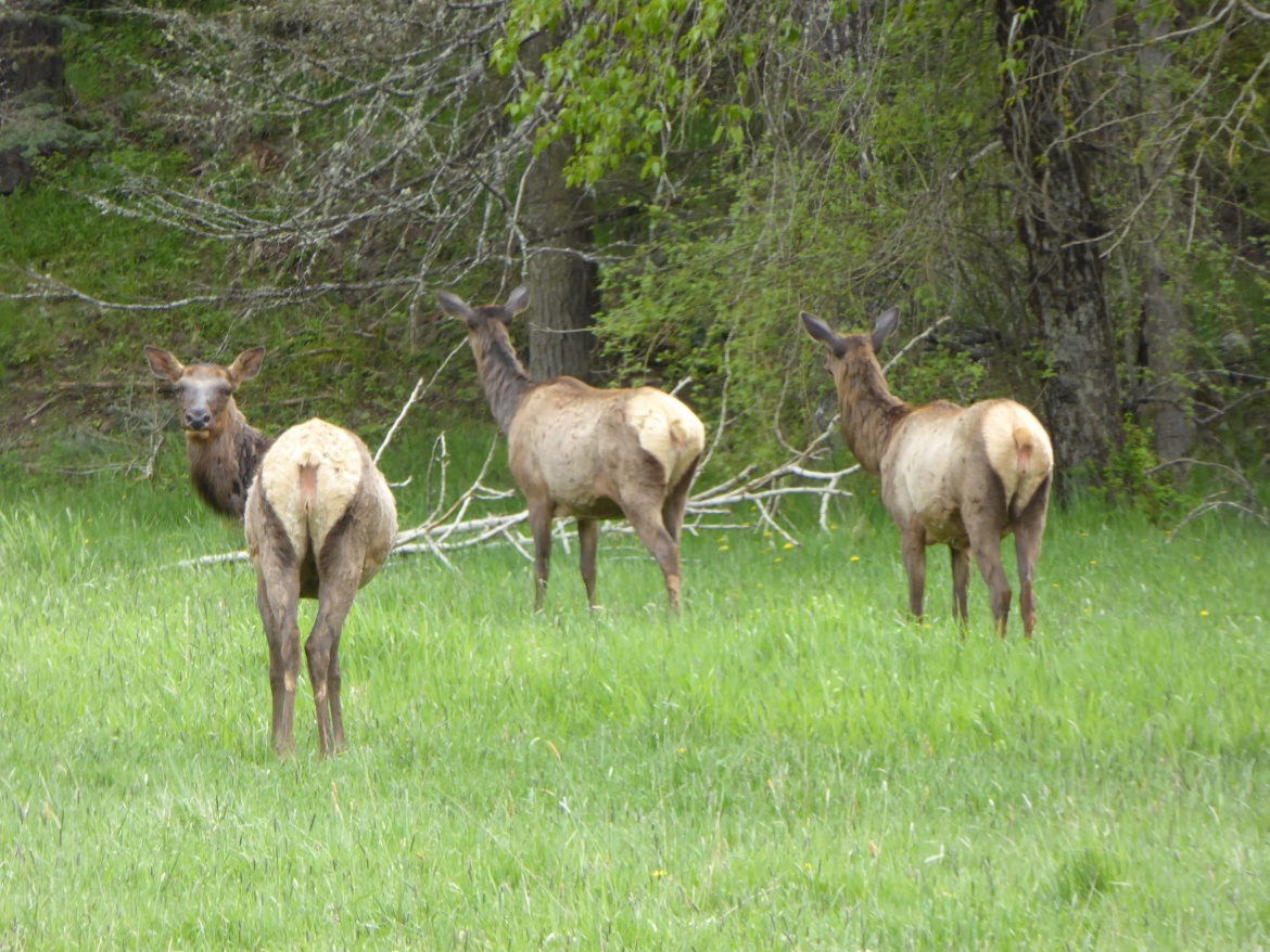More Elk Hunting Opportunities, Fewer Mule Deer Tags in Idaho This Year