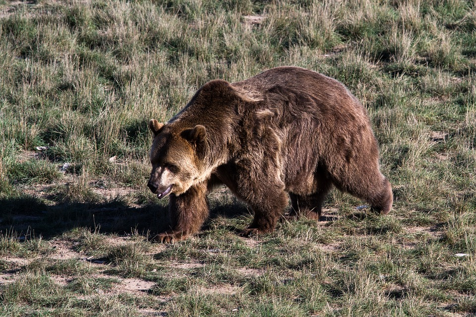 British Columbia Farmer Fined for Shooting Four Grizzly Bears