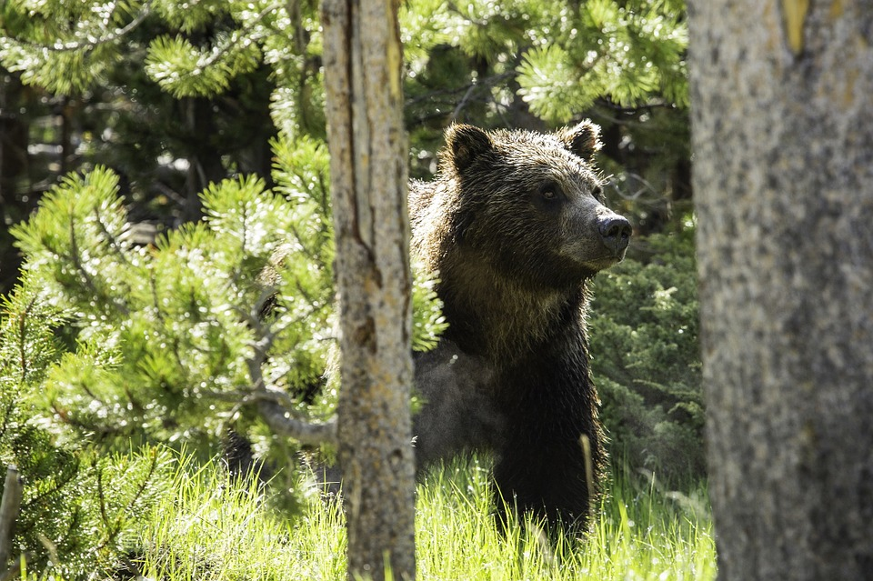 BC Forestry Worker Mauled by Grizzly Bear