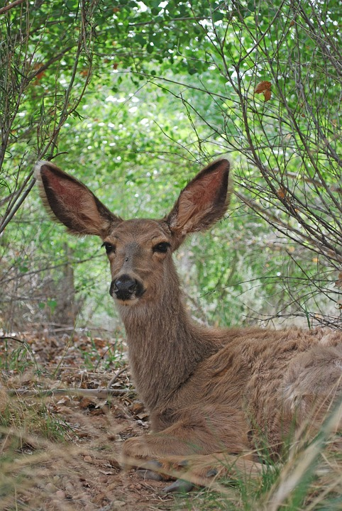 Wyoming Mule Deer Diagnosed with Chronic Wasting Disease