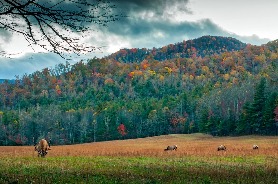 Electric Fencing and Additional Game Land to Reduce North Carolina Elk Conflicts