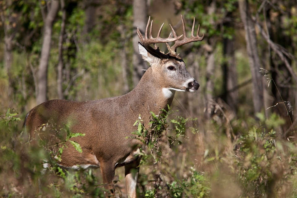 Delaware's 2016/17 Deer Harvest Sets New All-Time High Record